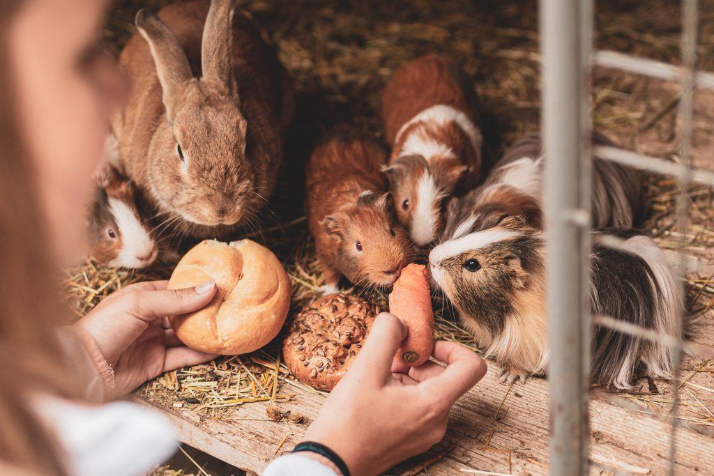 Organic hotel Feistererhof farm