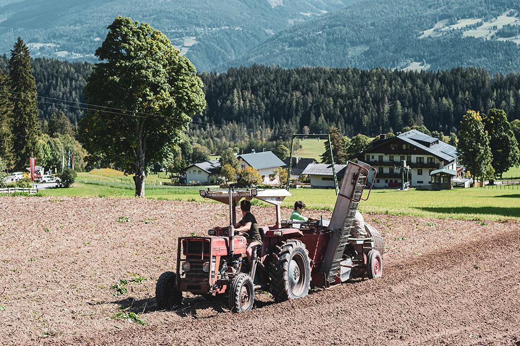 Organic hotel Feistererhof potato cultivation